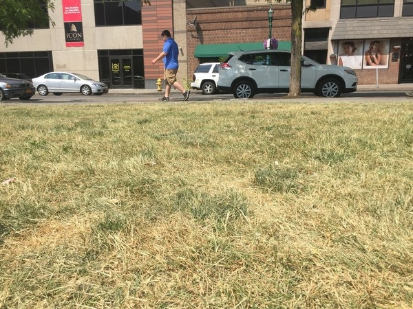 A dry early June turned the grass brown in M. Lemp Park in downtown Syracuse. (Glenn Coin | gcoin@syracuse.com)