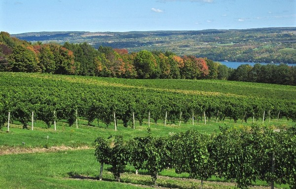 A view of vineyards on Seneca Lake. State environmental official have rejected plans for liquid gas storage along the lake shore.