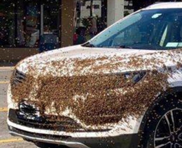 PHOTO: Why did hundreds of bees engulf this SUV at an Upstate NY shopping plaza?