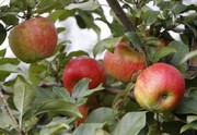 Grim's Orchard tussling with township over agritainment