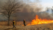Controlled burn taking place at 2 Central Jersey forests