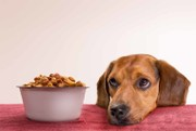 Does your pet need a nutrition supplement? Experts weigh in on pet nutrition 101