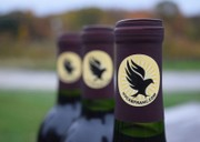 Hudson Valley wineries look to make their mark with Cabernet Franc