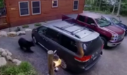 WATCH: Bear opens minivan doors, gets inside for romp with cubs in the Adirondacks