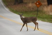 Oh, deer! N.J. issues annual warning to drivers