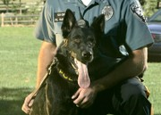 Greenwich Township police mourn death of K-9 Zeus