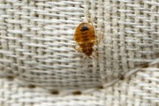 DPW worker sues Phillipsburg over alleged exposure to bedbugs in trash
