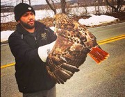 Red-tailed hawk on road to recovery after being hit by car in Warren County