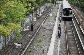 Goats stand on subway tracks in Brooklyn on Monday.