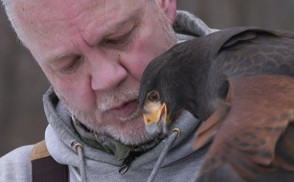 Al Jordan of Greece feeds a piece of rabbit meat to Z, one of his Harris's hawks, as a reward for coming back to him during a recent hunt.