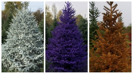 trend of real painted christmas trees comes to upstate ny - Christmas In The Country Hamburg Ny