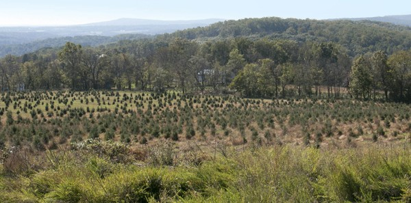 The Hunterdon Land Trust is helping spread a little holiday cheer with the preservation of the 127-acre Charlie Brown Christmas Tree Farm in Holland Township. (courtesy photo)