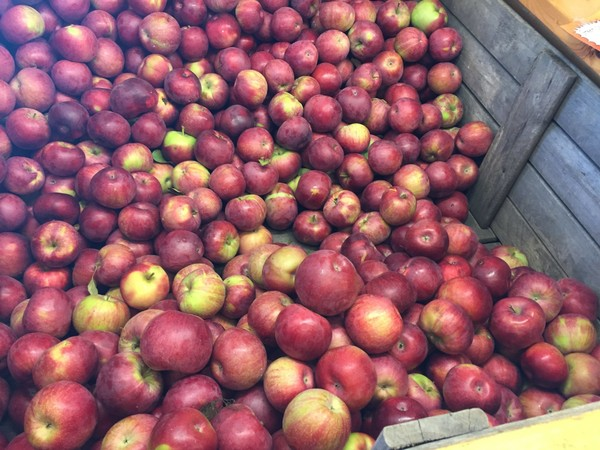 Apples at Abbott Farms at 3275 Cold Springs Road near Baldwinsville, N.Y. The farm houses  Four Daughters Wine & Cider Co.