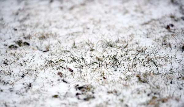Wet snow sticks to the grass in this March 2016 file photo. Snow could fall Thursday and Friday across Upstate New York, particularly at higher elevations.