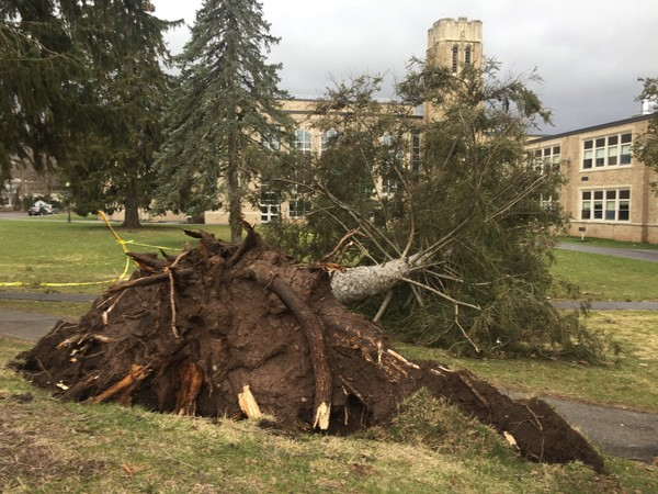 Wind gusts of nearly 50 mph uprooted this tree Monday on the grounds of Clinton High School in the Oneida County.