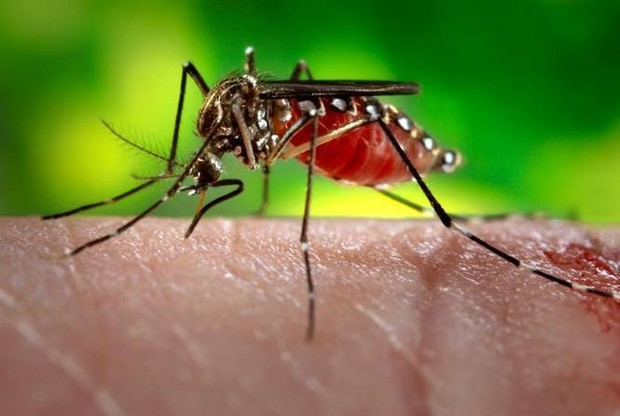 NY has more travel-related Zika cases than other states