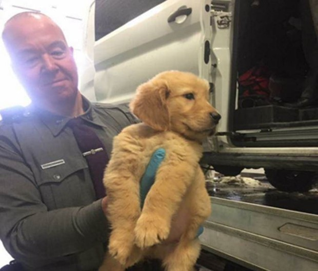 Ny State Police Rescue 103 Puppies In Upstate Ny After